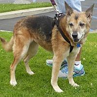 Adopt A Pet :: Kori - West Los Angeles, CA
