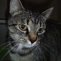 Adopt A Pet :: Willow - Hamburg, NY