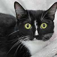 Adopt A Pet :: Ms. T - Raleigh, NC