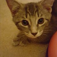Adopt A Pet :: Jack - Stafford, VA