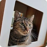 Adopt A Pet :: Pretty Lady - Elyria, OH