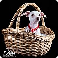 Adopt A Pet :: Squeaky - Lodi, CA