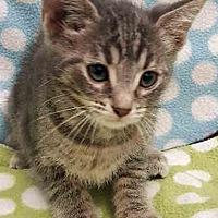 Adopt A Pet :: Florlal - Gahanna, OH