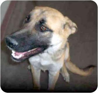 German Shepherd Dog Dog for adoption in San Clemente, California - CHARLIE