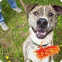 Adopt A Pet :: Heather - Crescent City, CA