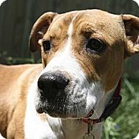 Adopt A Pet :: Tango - Nashville, TN