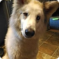 Adopt A Pet :: Einstein - Wilmington, MA