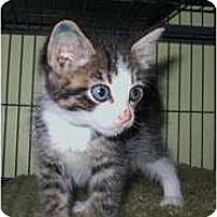 Adopt A Pet :: Billy - Shelton, WA