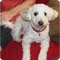 Adopt A Pet :: Duke - Palmyra, WI