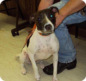Terrier (Unknown Type, Medium) Mix Dog for adoption in Mt. Vernon, Illinois - Coal