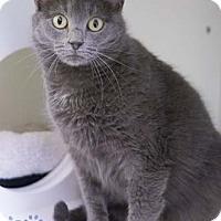 Adopt A Pet :: Penelope - Merrifield, VA