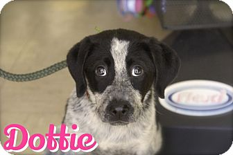 Hound (Unknown Type) Mix Puppy for adoption in Pompton Lakes, New Jersey - dottie