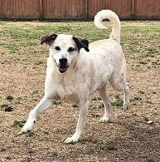"""Hound (Unknown Type) Dog for adoption in Little Rock, Arkansas - SCJC49 """"EARNIE"""""""