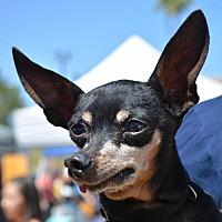 Adopt A Pet :: Salty - Phoenix, AZ