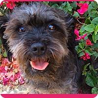 Adopt A Pet :: PRECIOUS *Penny**Video* - Pasadena, CA