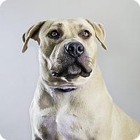 Adopt A Pet :: Mariah - Los Angeles, CA