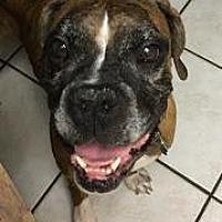 Adopt A Pet :: Poppy - Plant City, FL
