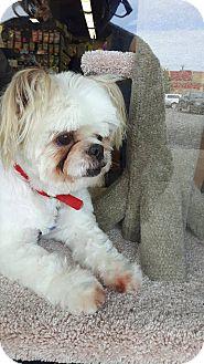 Shih Tzu Mix Dog for adoption in Hamilton, Ontario - Margo