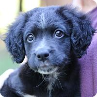 Adopt A Pet :: Willow - Cedartown, GA