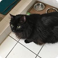 Adopt A Pet :: Chloe - Somerville, MA
