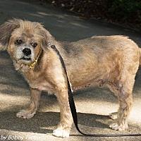 Adopt A Pet :: QUINCEY - Raleigh, NC