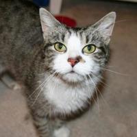 Adopt A Pet :: Feisty - Ashland, VA