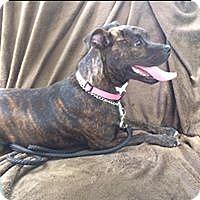Adopt A Pet :: Sola - Miami Shores, FL