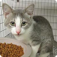 Adopt A Pet :: Jasmine - Reeds Spring, MO