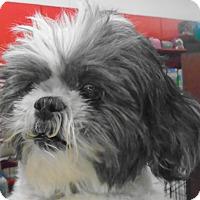 Adopt A Pet :: Sarah - Chesterfield, MO