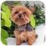 Photo 2 - Yorkie, Yorkshire Terrier Dog for adoption in Los Angeles, California - MIDGET
