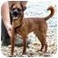 Photo 3 - Chihuahua Mix Dog for adoption in Cleveland, Georgia - Radar