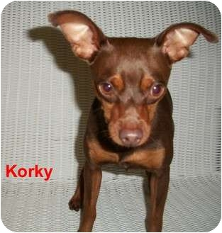 Miniature Pinscher Dog for adoption in Slidell, Louisiana - Korky