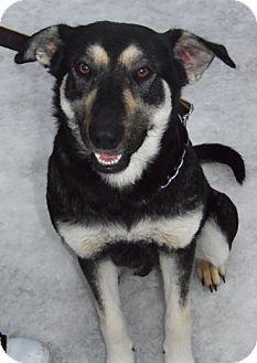 Shepherd (Unknown Type) Mix Dog for adoption in Owatonna, Minnesota - Dorothy
