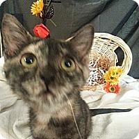 Adopt A Pet :: Elsa - Clearfield, UT