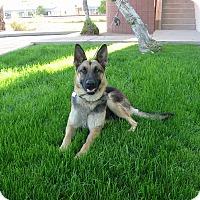 Adopt A Pet :: Hanna Von Altenberg - Phoenix, AZ