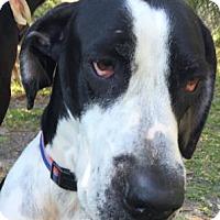 Adopt A Pet :: Razor - Sarasota, FL