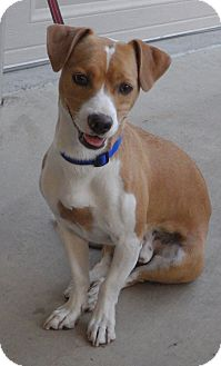 Beagle Mix Dog for adoption in Quail Valley, California - Shiloh