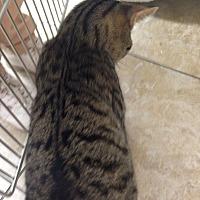 Adopt A Pet :: ATLAS - Putnam Hall, FL