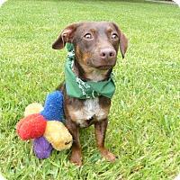Adopt A Pet :: Manni - Mocksville, NC
