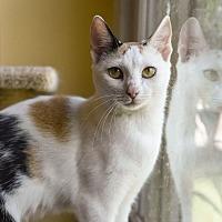 Adopt A Pet :: MayPole - Huntsville, AL