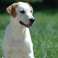 Adopt A Pet :: Cassius - Buffalo, WY