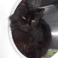 Adopt A Pet :: Jack - Jackson, MI