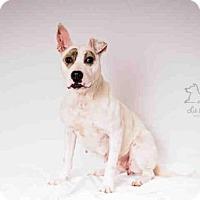 Adopt A Pet :: NOVA - Salt Lake City, UT