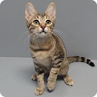 Adopt A Pet :: Shiner - Seguin, TX