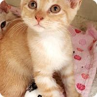 Adopt A Pet :: Sunny,Sherbert, & Sandy - Key Largo, FL