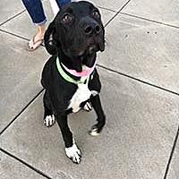 Adopt A Pet :: Razzle - Chantilly, VA