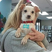 Adopt A Pet :: Rudy - Encinitas, CA