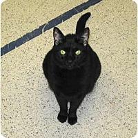 Adopt A Pet :: Polix - Warminster, PA