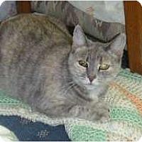 Adopt A Pet :: Odette - Hamburg, NY