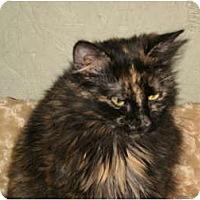Adopt A Pet :: Nina - Morris, PA